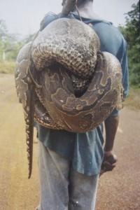 stroper met dode python